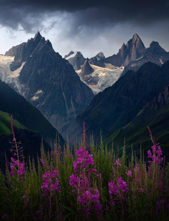 beautiful wildflowers of caucasus mountains